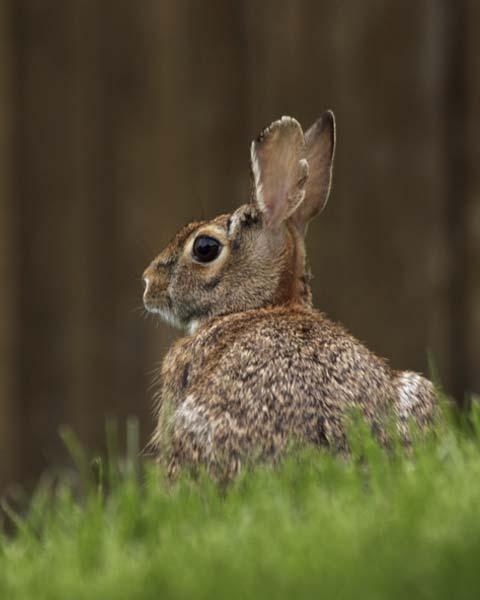 high definition rabbit.
